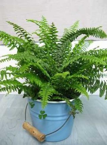 بالصور اليك افضل 10 نباتات لتنقية الهواء داخل المنزل 1433501295.531017.inarticleLarge