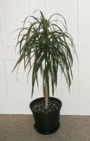 بالصور اليك افضل 10 نباتات لتنقية الهواء داخل المنزل 1433501355.522578.inarticleLarge
