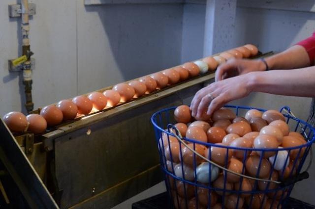 هل يجب ان نغسل البيض قبل طهيه؟