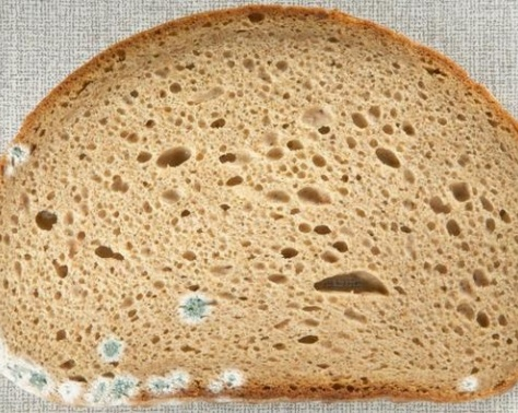 تحذير - توقفوا فوراً عن القيام بهذا الامر بالخبز المتعفن!